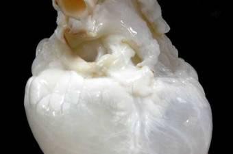 İlk Kez Göreceğiniz Şaşırtıcı Fotoğraflar